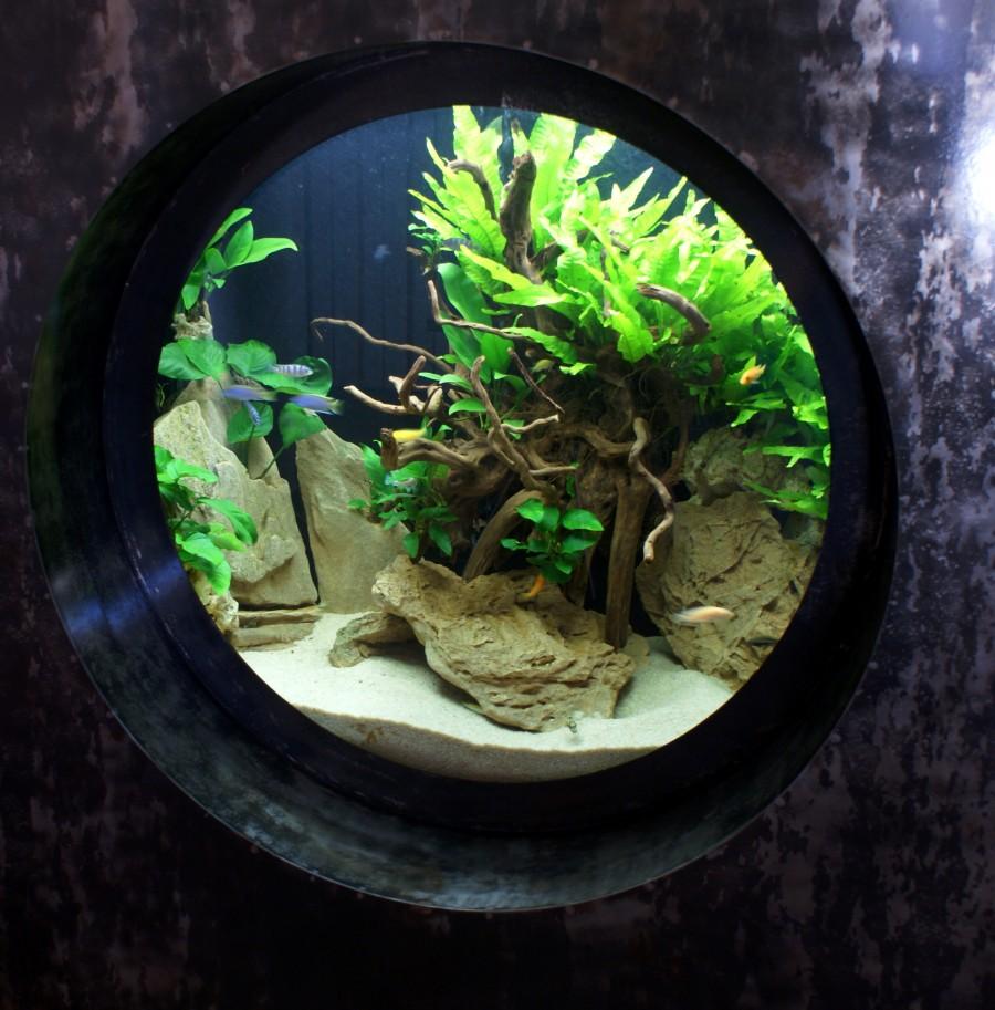 Akwarium w kształcie okręgu