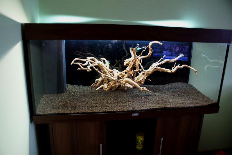 Akwarium roślinne krok po kroku 1
