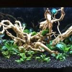 Akwarium roślinne krok po kroku 2