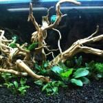 Akwarium roślinne krok po kroku 3