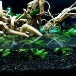 Akwarium roślinne krok po kroku 4