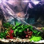 Akwarium roślinne wielogatunkowe