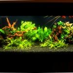 Akwarium roślinne wielogatunkowe (2)