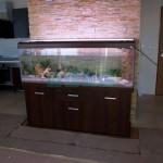 Akwarium skaliste (2)