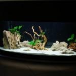 Akwarium w aptece (2)