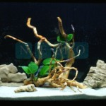 Akwarium w aptece (3)