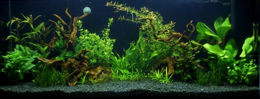 Akwarium w zabudowie z wygodnym panelem otwieranym od góry w firmie informatycznej c.d. - roślinna aranżcja ( 2 tygodnie po założeniu).