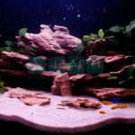Narożne akwarium z Pyszczakiami (2)