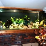 Wielkoformatowe akwarium Tanganika