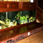 Wielkoformatowe akwarium Tanganika (3)
