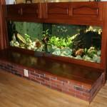 Wielkoformatowe akwarium Tanganika (4)