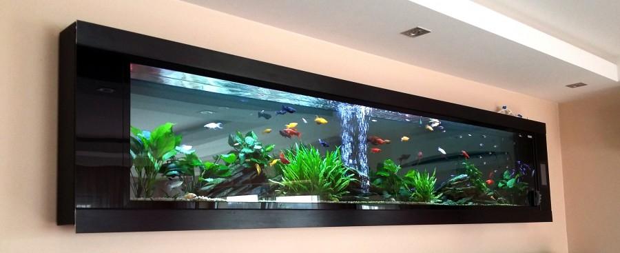 Akwarium na ścianie