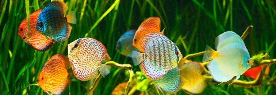 Projektowanie akwariów